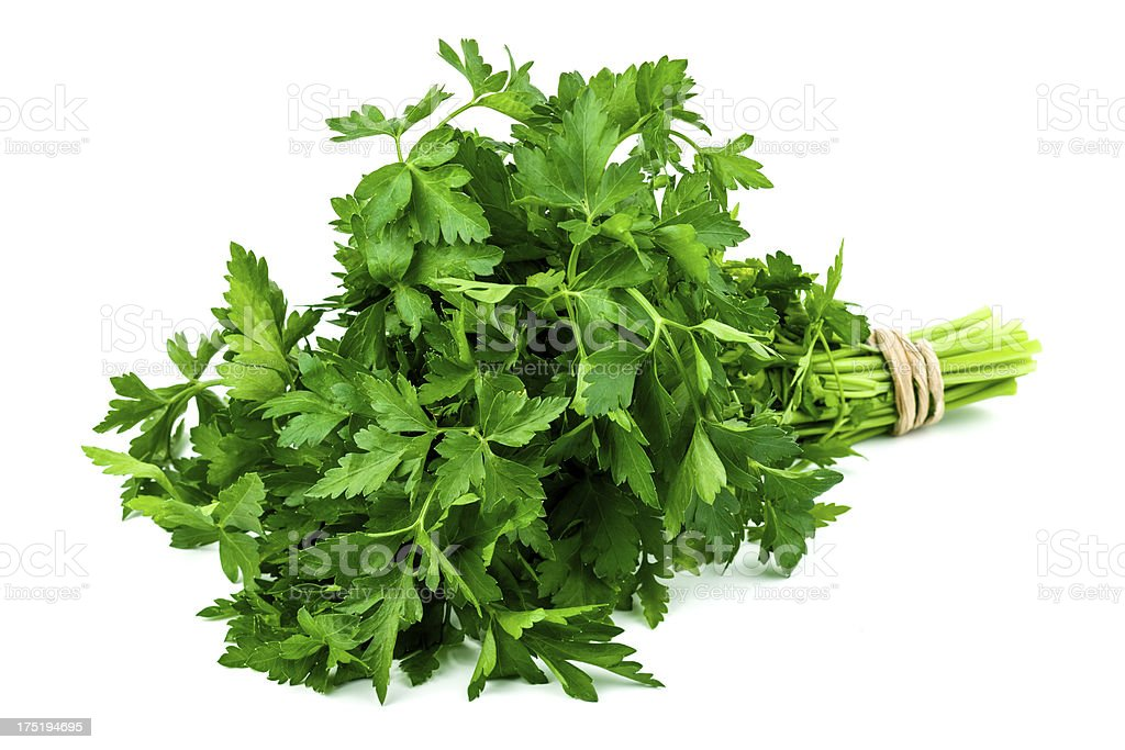 Fresh Italian parsley branch stock photo