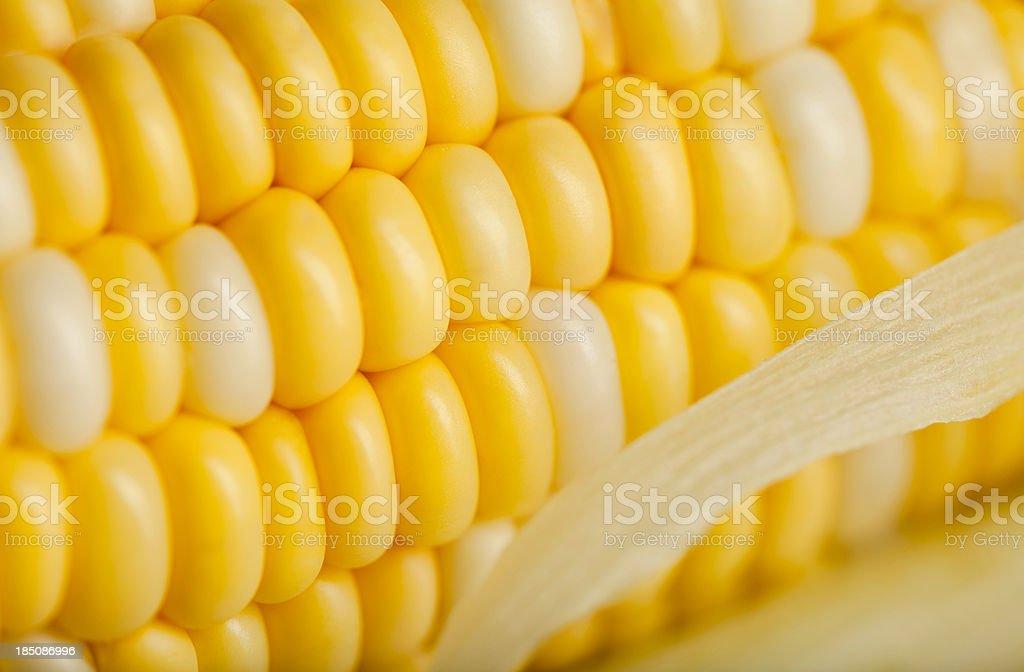 Fresh Juicy Corn on the Cob royalty-free stock photo