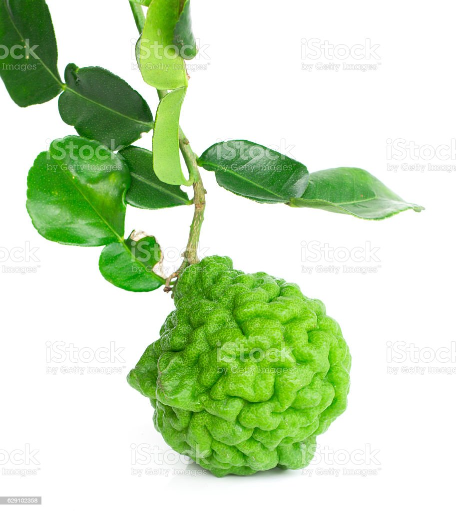 Fresh kaffir lime and leaves stock photo