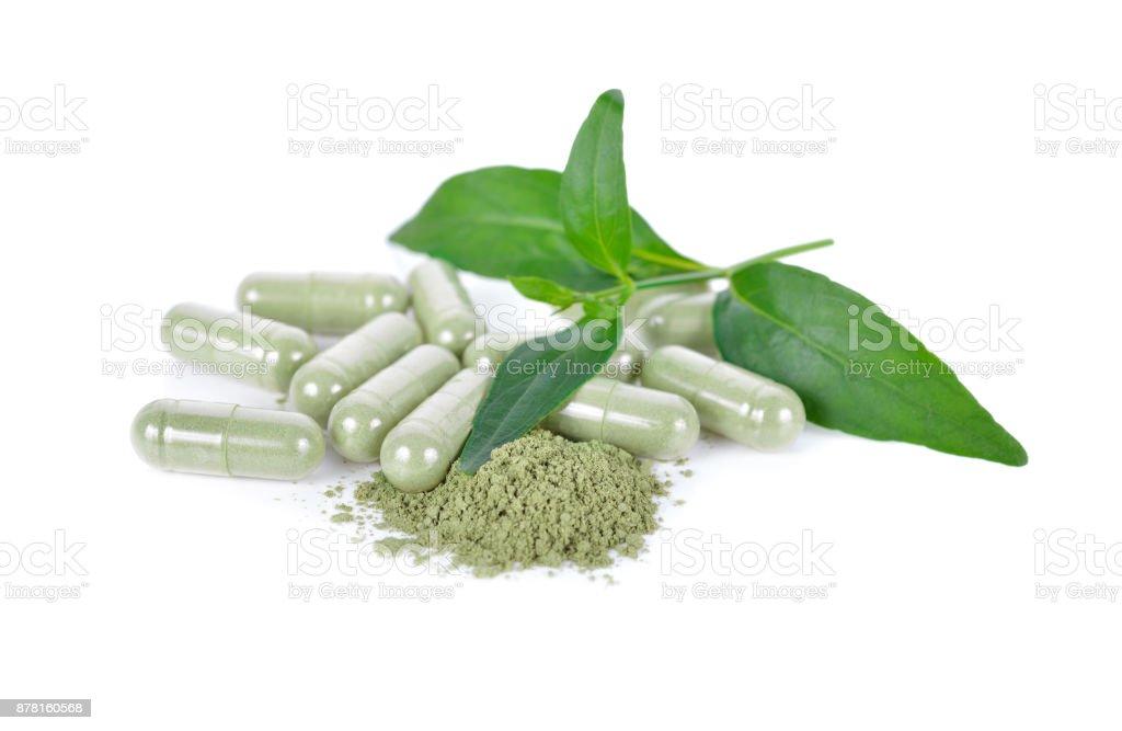 hojas de kariyat frescas, tierra y hierbas cápsula sobre fondo blanco foto de stock libre de derechos