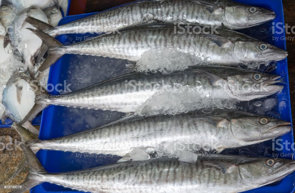 fresh King mackerel (Scomberomorus commerson) at Thailand market stock photo