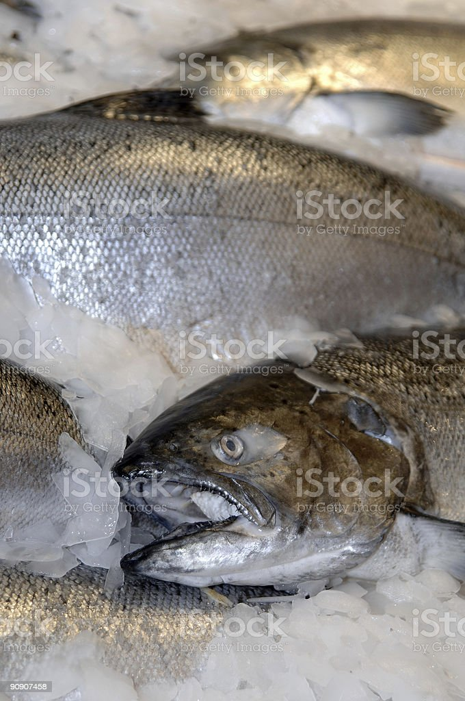 Fresh King Salmon royalty-free stock photo