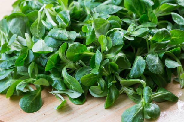 Frisches Lamm Salat Feldsalat auf Holztisch. Grüne Salatblätter (Valerianella Locusta) – Foto