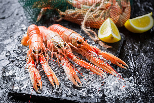 Fresh langoustines on crushed ice stock photo