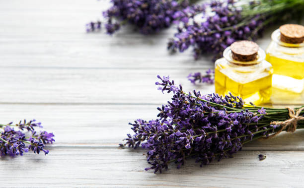 Fresh lavender flowers and essential oils picture id1273253784?b=1&k=6&m=1273253784&s=612x612&w=0&h=zixoseft um72z6jm8ux9knh0lrwrltfqfronsjnmkm=