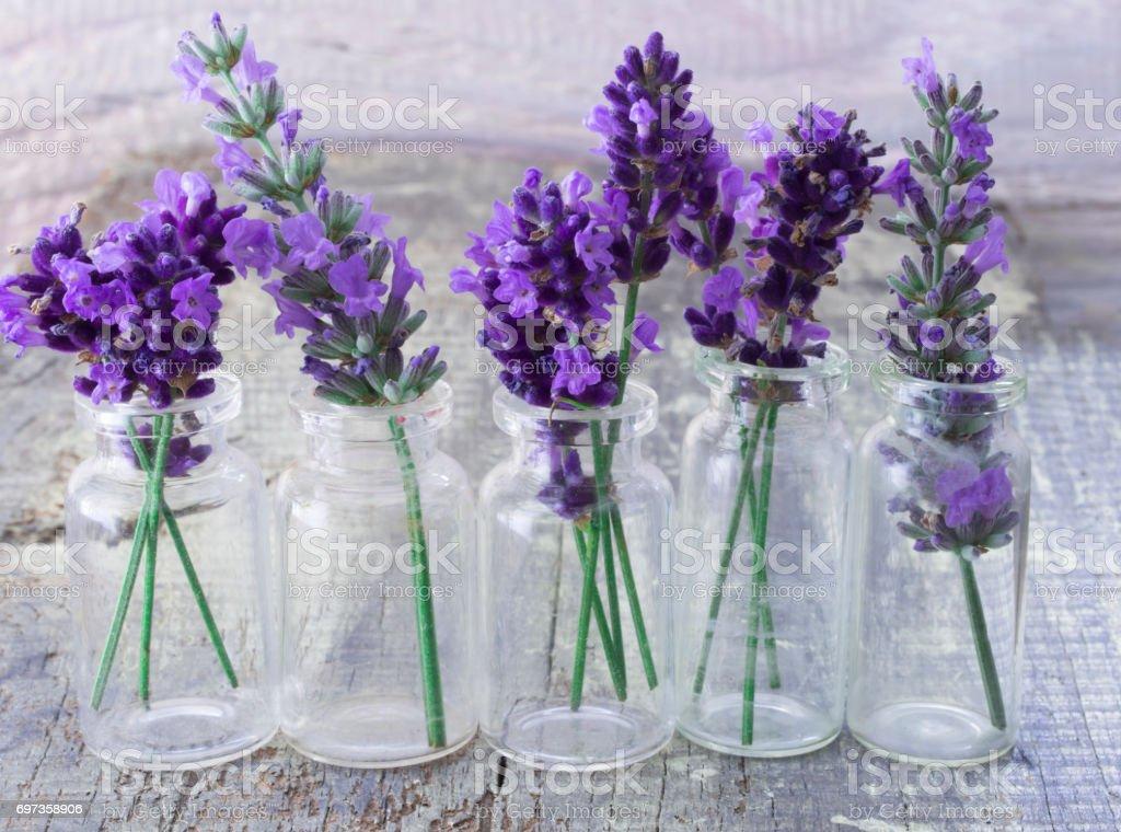 fresh lavender flowers stock photo