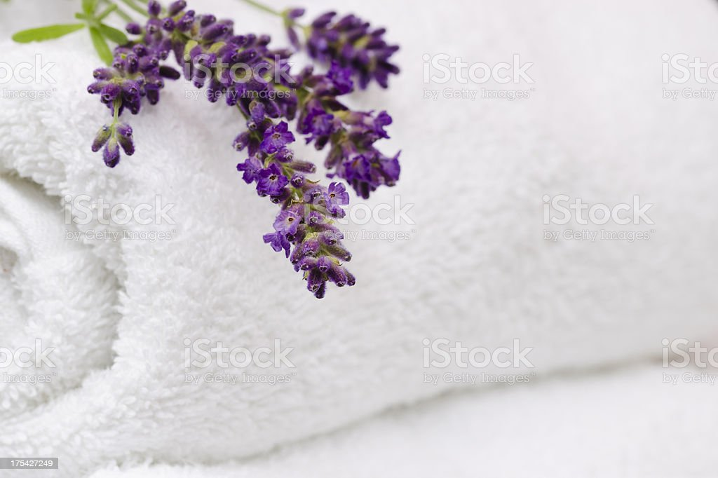 Fresh Lavender on Rolled White Towels with Copy Space Horizontal stock photo