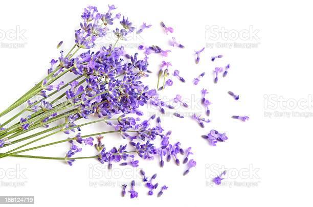 Fresh lavender picture id186124719?b=1&k=6&m=186124719&s=612x612&h=scj3at6xrkt74ozjc2pz kokokdfdd545o31nk2ouaa=