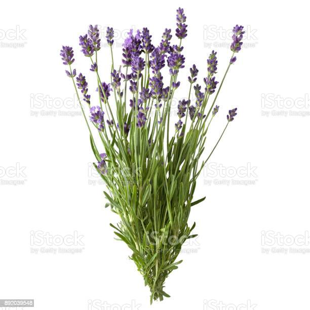 Fresh lavender sprig with flowers picture id892039548?b=1&k=6&m=892039548&s=612x612&h=kcrvem6rpqiom80pjl5ywqsw9ro1abwvs8rsakqgrpu=