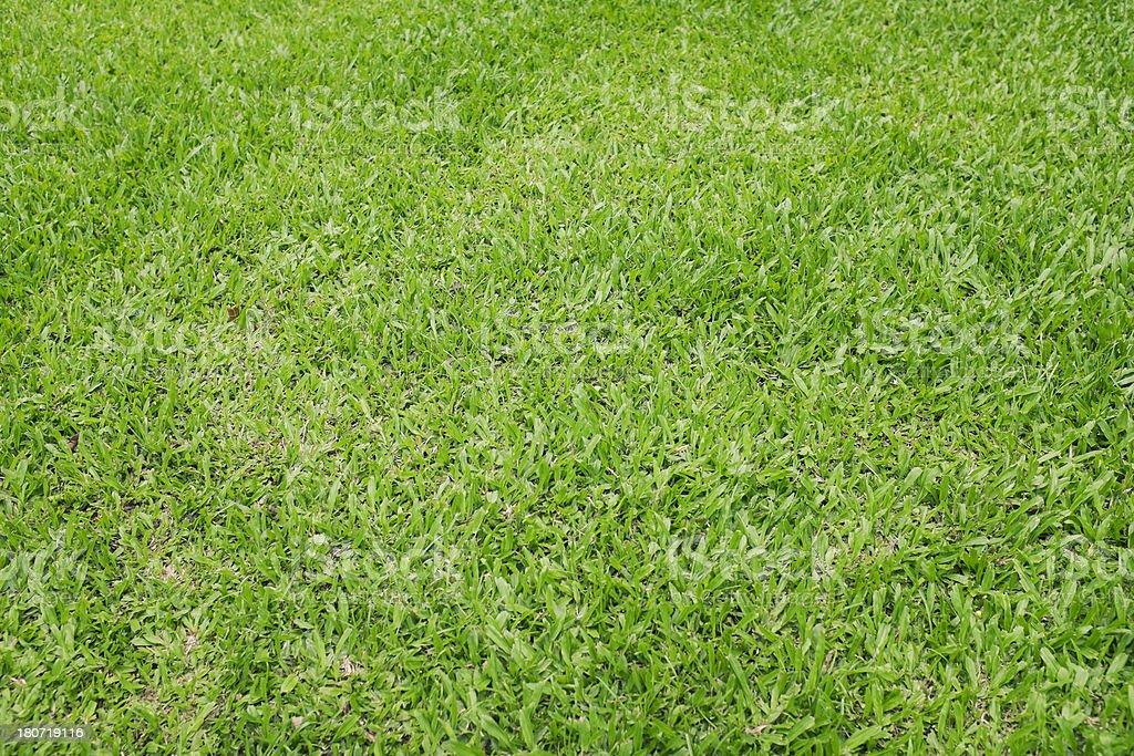 Fresh Lawn royalty-free stock photo