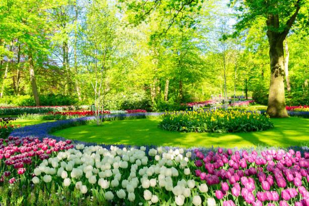 Fresh lawn with flowers picture id1058105010?b=1&k=6&m=1058105010&s=612x612&w=0&h=tkskxq7jjwgjyo2xml2  enb7ry hccfdseqhb3sifm=