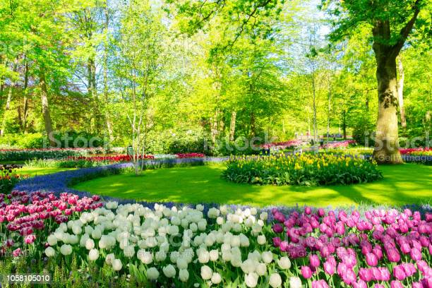 Photo of fresh lawn with flowers