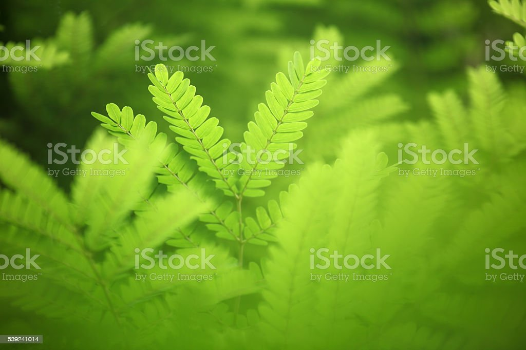 fresh leaf as background royalty-free stock photo