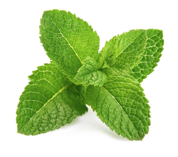 świeży liść mięty zielony składnik ziół - liść mięty przyprawa zdjęcia i obrazy z banku zdjęć