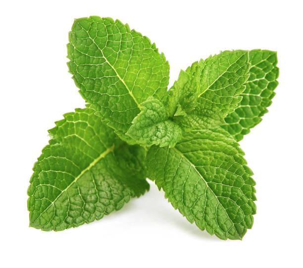 fresh leaf mint green herbs ingredient - przybranie zdjęcia i obrazy z banku zdjęć