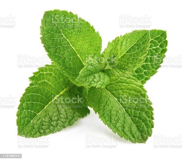 Photo of Fresh leaf mint green herbs ingredient