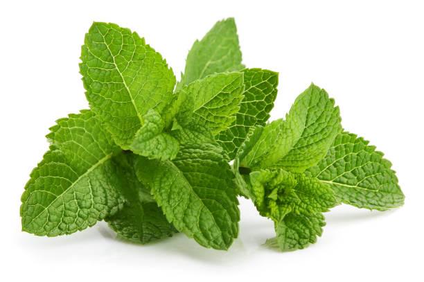 fresh leaf mint green herbs ingredient - białe tło zdjęcia i obrazy z banku zdjęć