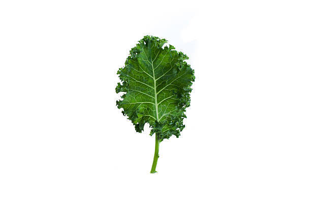 A fresh leaf of green kale on white background Single leaf of organic green kale on white background kale stock pictures, royalty-free photos & images