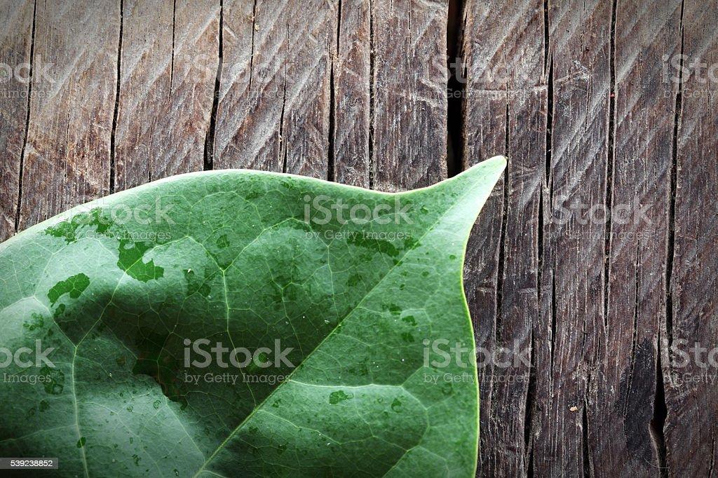 fresh leaf on grunge panel royalty-free stock photo