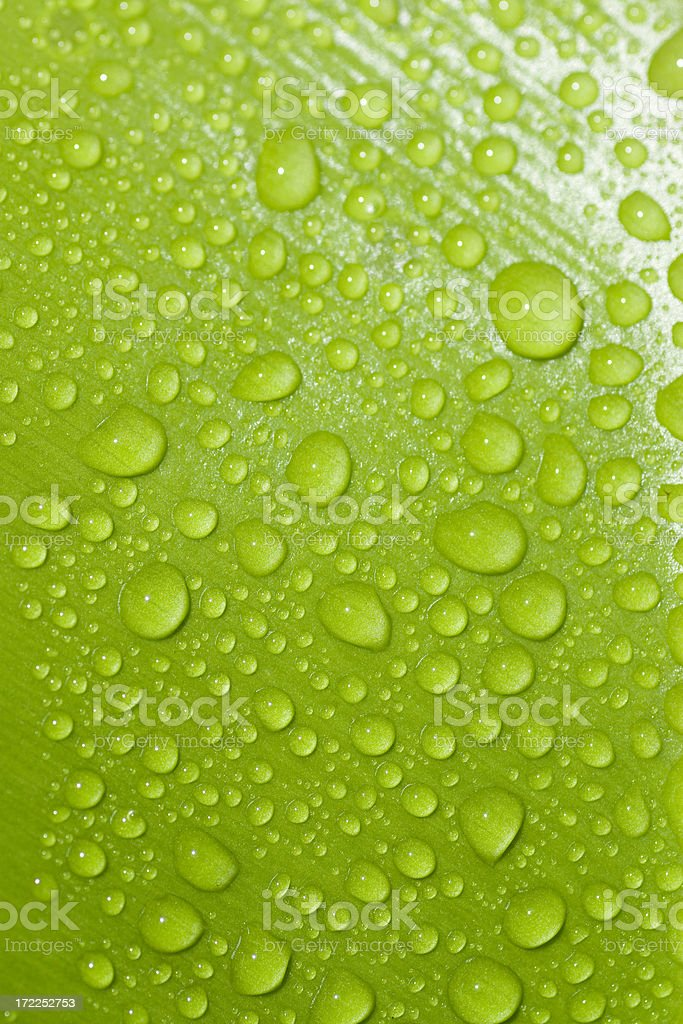 Fresh leaf with water drops royalty-free stock photo
