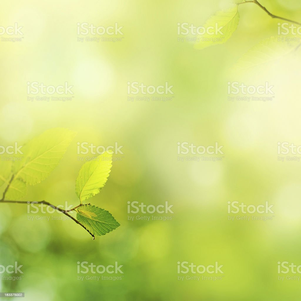 Fresh leafs in the morning stock photo