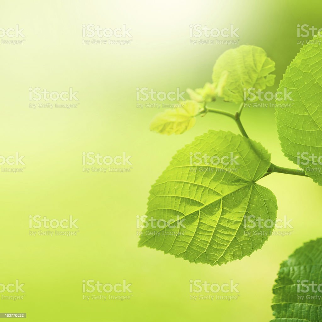 Fresh leafs in the morning royalty-free stock photo