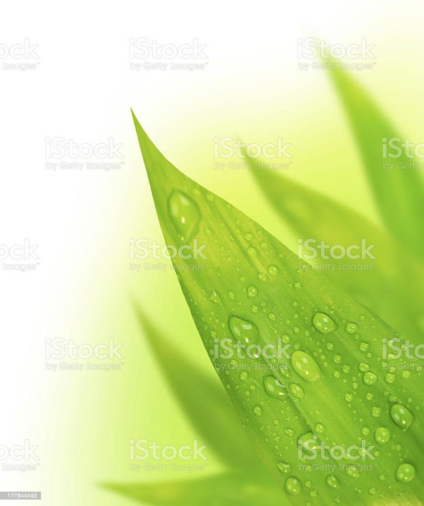 Fresh leaves border royalty-free stock photo
