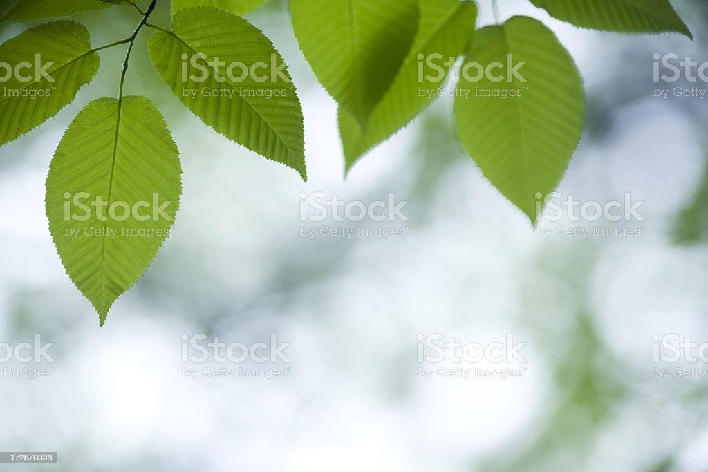 Fresh Leaves Close Up royalty-free stock photo
