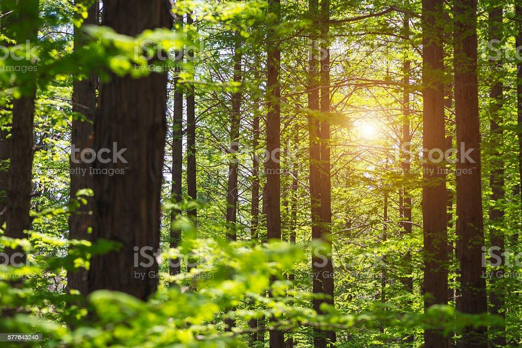 Frische Blätter in einem Wald – Foto
