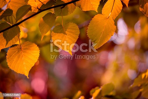 Autumn colors in the forest. Deciduous tree. Toned image.