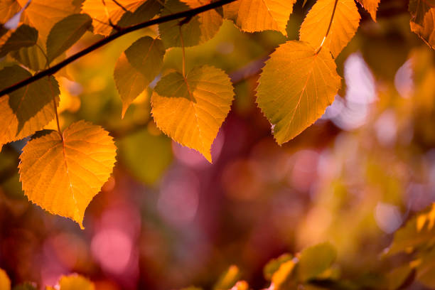 Fresh leaves in autumn colors