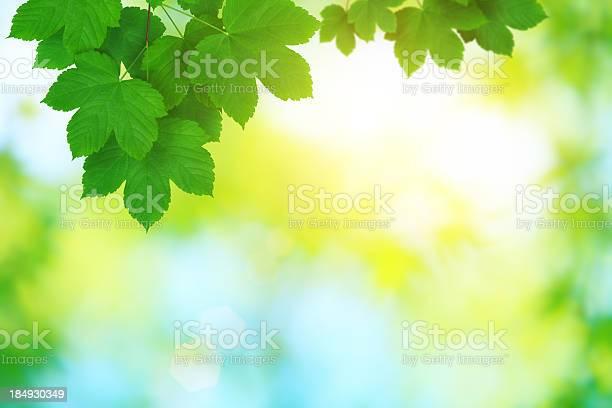 Photo of Fresh Leaves