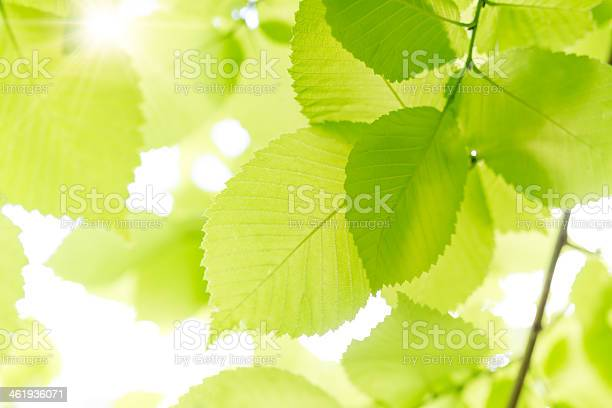 Photo of Fresh Leaves.