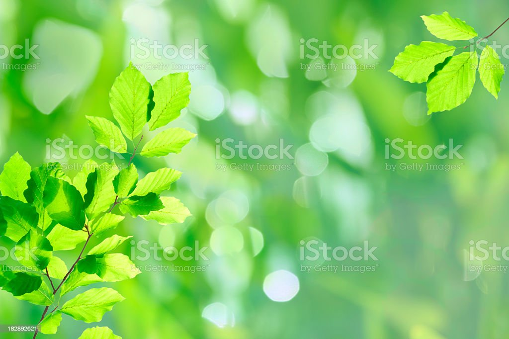 Fresh leaves XXXL royalty-free stock photo