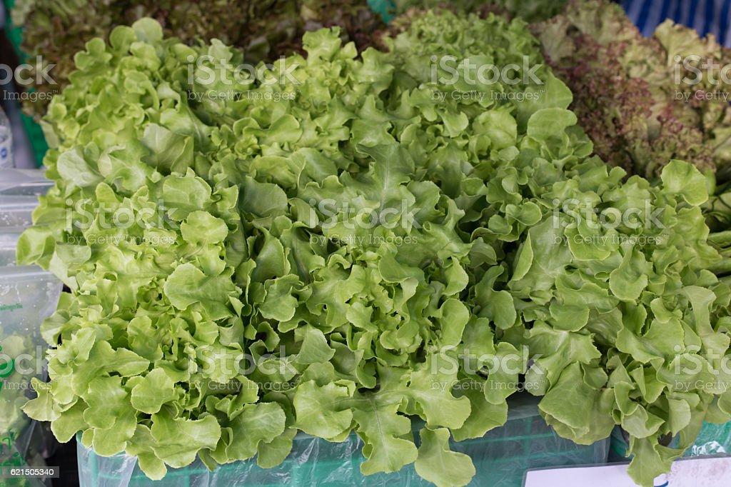 Fresh lettuce in street market thailand photo libre de droits