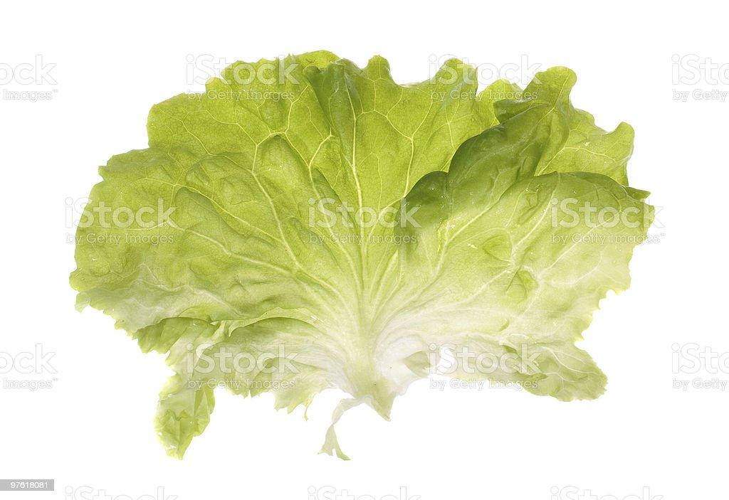 Une Feuille de salade photo libre de droits