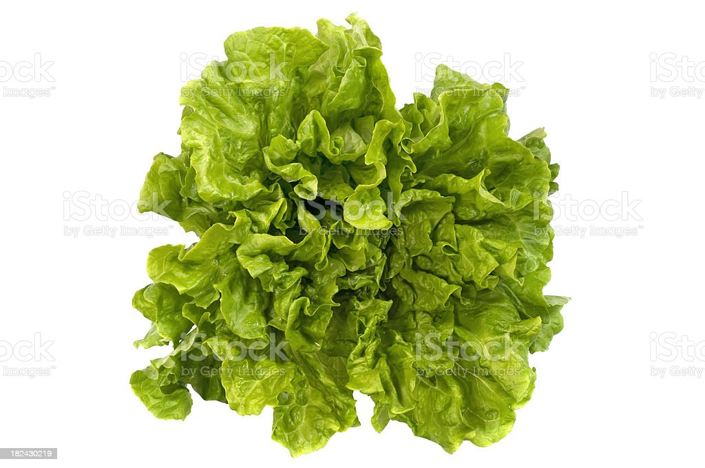 Fresh lettuce royalty-free stock photo