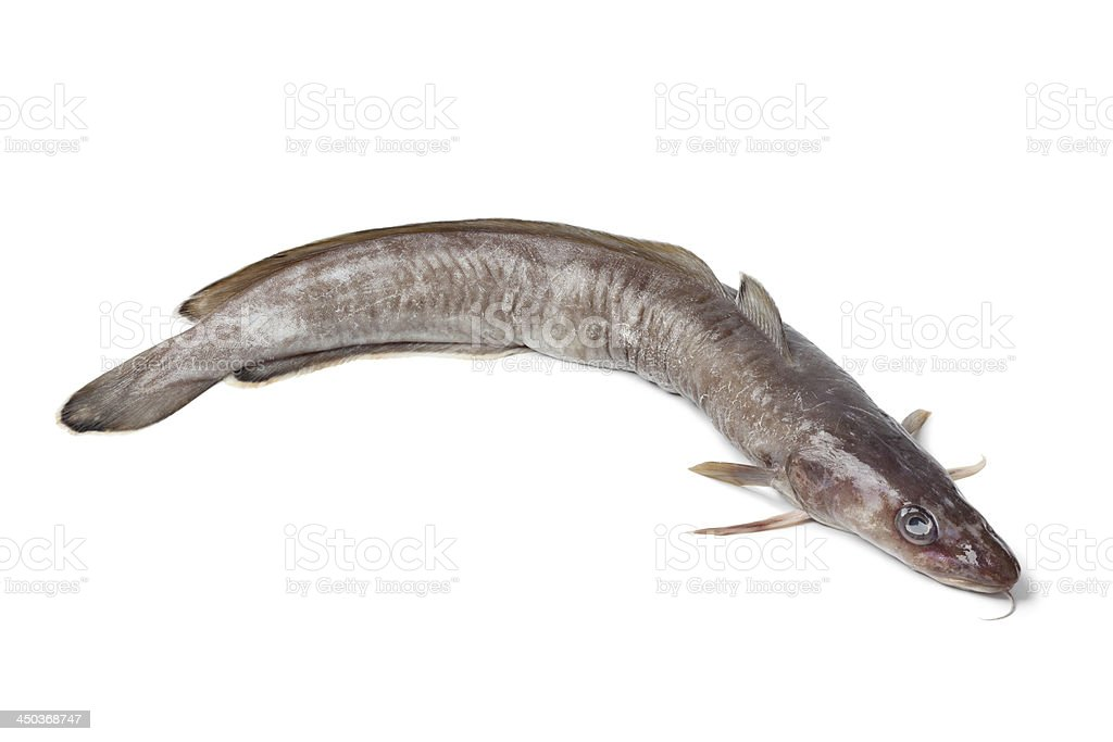 Fresh ling fish stock photo