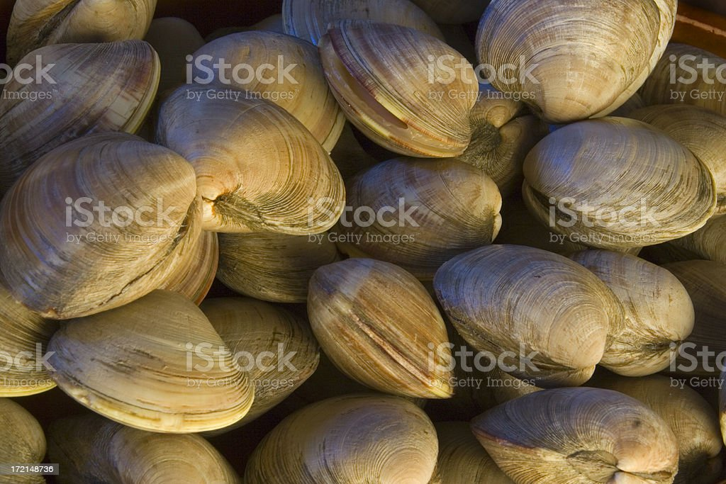 Fresh Littlenecks Clams Shellfish Seafood in Fish Market royalty-free stock photo