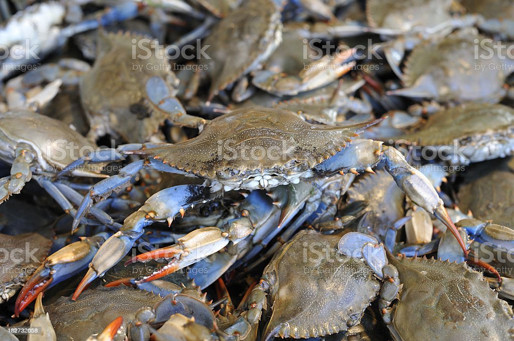 Fresh Living Blue Crabs at the Fish Market stock photo