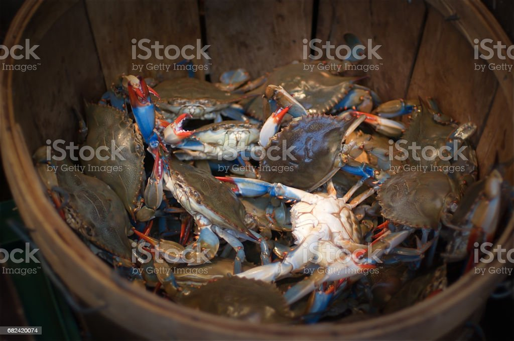 Fresh Living Blue Crabs at the Fish Market royalty-free stock photo