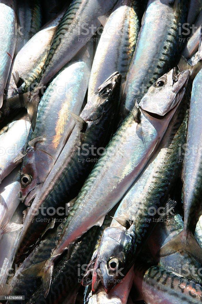 Fresh Mackerel Fish stock photo
