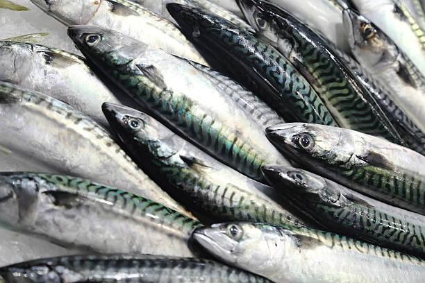 Fresh mackerel on the market stock photo