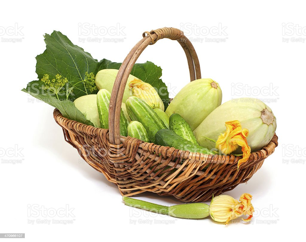 fresh marrow and cucumbers in a basket royalty-free stock photo