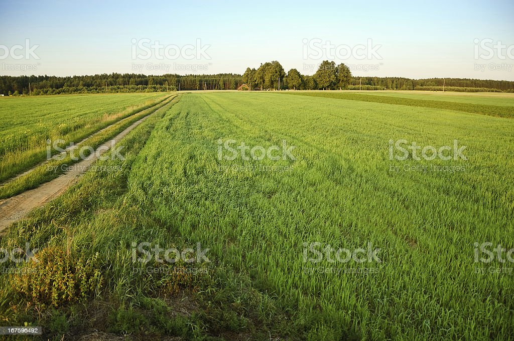 Fresh meadow field royalty-free stock photo