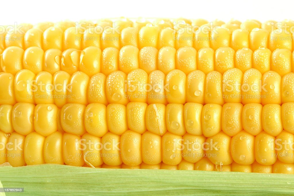 Fresh mealie and dewdrops royalty-free stock photo