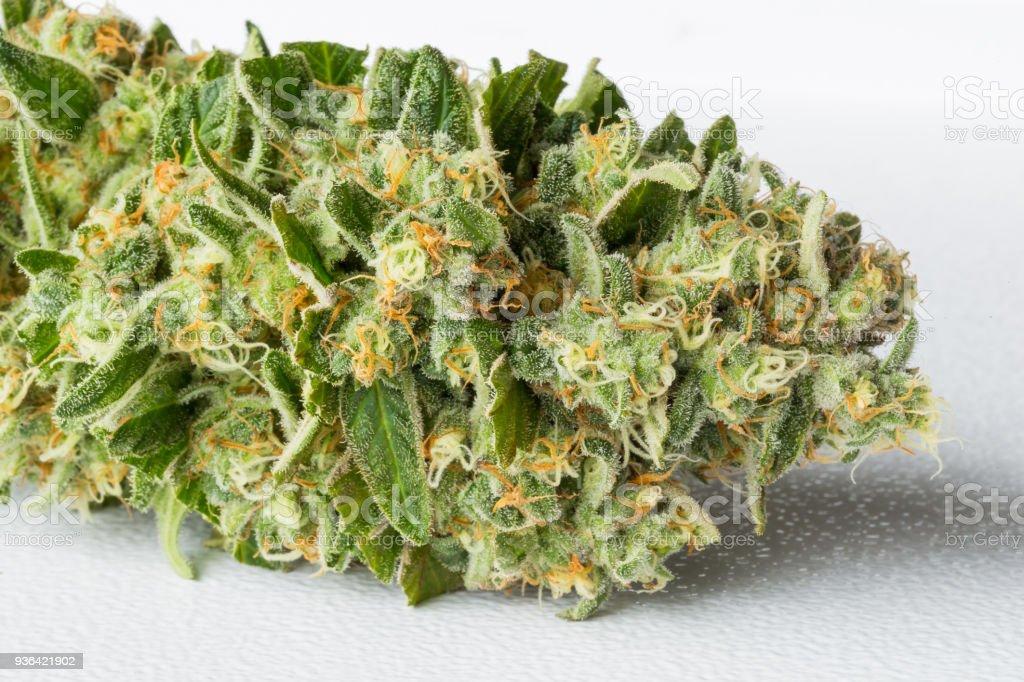 Fresh Medical Marijuana Cannabis on a white background stock photo