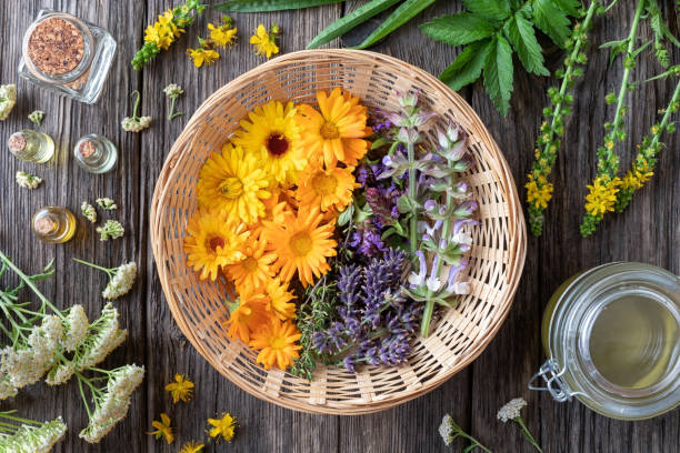 Fresh medicinal herbs and essential oils - ingredients to prepare a homemade skin product Fresh medicinal herbs and essential oils - ingredients to prepare a homemade skin product, top view foraging stock pictures, royalty-free photos & images