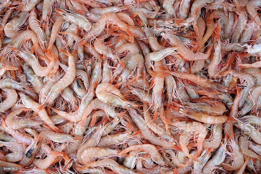 Fresh mediterranean Shrimp stock photo
