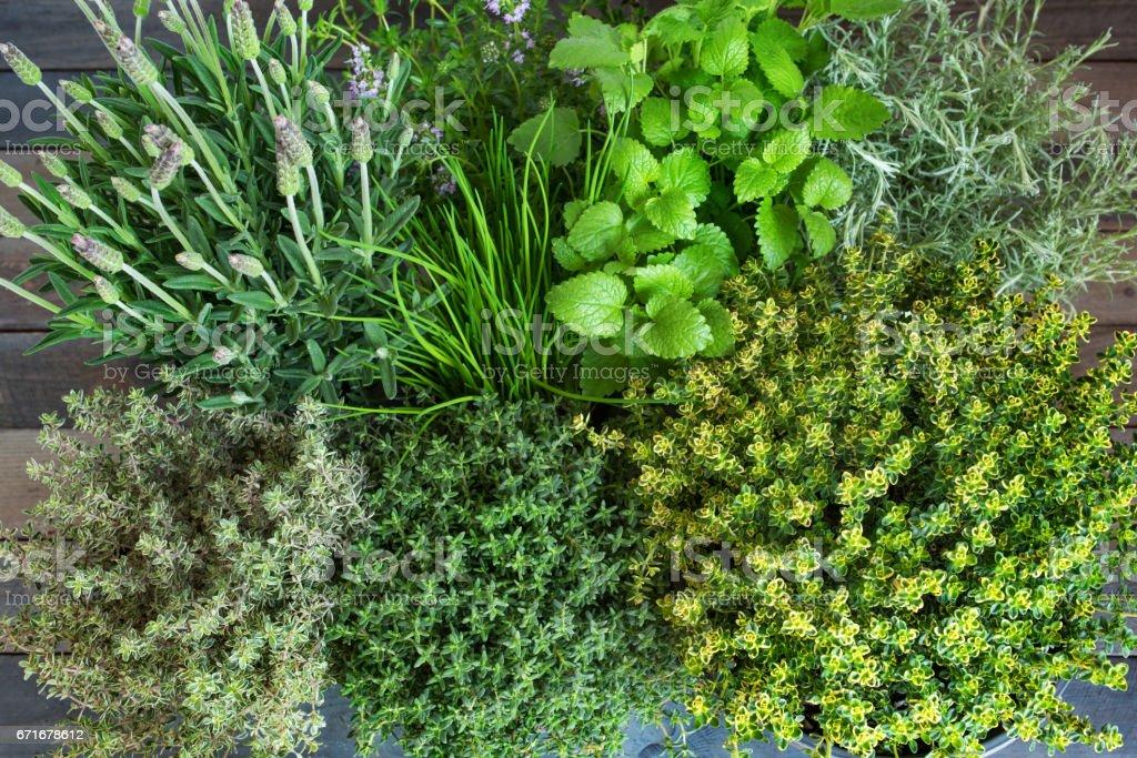 Fresh mediterranean spice herbs stock photo